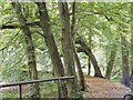 SP0583 : Winterbourne Path by Gordon Griffiths