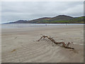 Q6400 : Driftwood on Inch Strand by Oliver Dixon