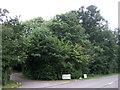 TM1580 : Woodland beside Norwich Road by JThomas