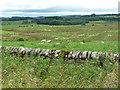 NZ0489 : Farmland near Rothley (6) by Stephen Richards
