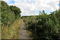 SP5528 : Bridleway on the Old Road by Des Blenkinsopp