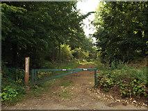 TQ0199 : Baldwin's Wood, near Chenies by Malc McDonald