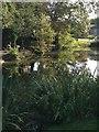 TL3852 : Manor Farm pond by Dave Thompson