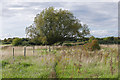 TQ0868 : Scrubland near Upper Halliford by Alan Hunt