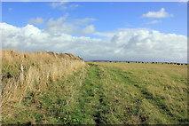 SH3369 : The Anglesey Coastal Path at Plas Llangwyfan. by Jeff Buck