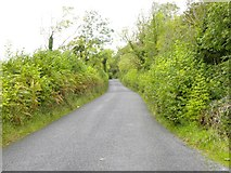 R3388 : Country road at Dromore by Gordon Hatton
