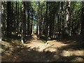 TF8745 : Cross track, Holkham Pines by Hugh Venables