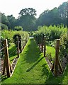 SO8610 : Painswick Rococo Gardens - Kitchen garden by Rob Farrow