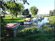 TL5369 : River cruisers moored at Upware, Cambridgeshire by Richard Humphrey