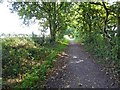 SK6556 : Southwell Trail near Farnsfield by Steve  Fareham