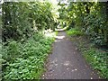 SK6954 : Nearing the end of the Southwell Trail by Steve  Fareham