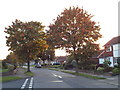 TL1405 : Autumn colour on Robert Avenue, St Albans by Malc McDonald