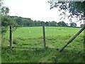 NY4825 : Sheep pasture between Barton House and Low Brow by Christine Johnstone