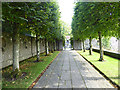 S4781 : The Pleached Walk, Heywood Estate by Oliver Dixon