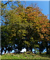 SK5804 : Trees on Leicester Castle Motte by Mat Fascione