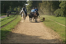 TQ2780 : View of horseriders and a dog coming up the bridleway in Hyde Park by Robert Lamb