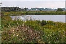 NT4681 : Marl Loch, Aberlady by Jim Barton