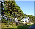 SW6724 : Culdrose security fence and trees by David Smith