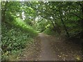 NT9952 : Path through the Goody Patchy, Tweedmouth by Graham Robson
