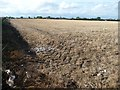 SD4531 : Remains of a bird in the corner of a stubble field by Christine Johnstone