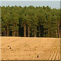 SK6170 : Stubble field with peasants and pines by Alan Murray-Rust
