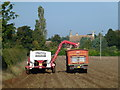 TL6568 : Potato harvesting near Park Farm, Chippenham by Richard Humphrey