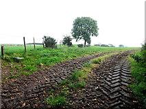 H5472 : Muddy tracks to a field, Bracky by Kenneth  Allen