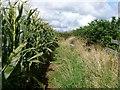 SD2469 : Scarbarrow Hill by Rude Health