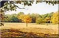 TQ2271 : Autumn colours on Wimbledon Common by Ben Brooksbank