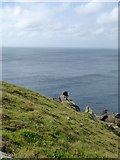 SW6516 : The edge of Higher Predannack Cliff (2) by David Smith