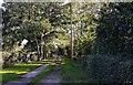 TM1589 : Tibenham Road: The entrance to Giltedge Farm by Michael Garlick