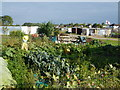 TL3578 : Allotments in Somersham by Richard Humphrey