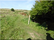 SW6911 : Inland footpath east of Lizard Point by David Smith