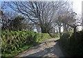 SX2181 : Lane past Treveth by Derek Harper