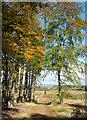 NY9956 : Forest road descending into Low Kellas Plantation by Trevor Littlewood