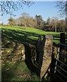 SX2578 : Gateposts, wall and field, Stonaford by Derek Harper