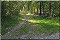 SU8458 : Hawley Common by Alan Hunt
