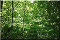 SO4086 : Ridgway Wood by Richard Webb