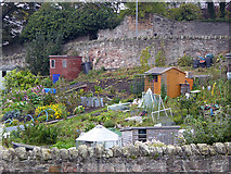 NU0052 : Allotments in Berwick by Oliver Dixon