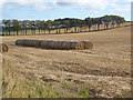 NT8757 : Round bales and row of trees at Harelaw by Oliver Dixon