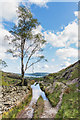 NY3607 : Track above Rydal Beck by Ian Capper