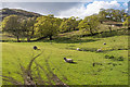 NY3606 : Above Rydal by Ian Capper