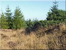 NH6561 : Axis of Wester Brae Long Cairn by Julian Paren