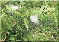 SM9039 : Spider silk on gorse by Rudi Winter