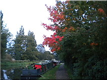TL0506 : Touched by autumn by Richard Vince