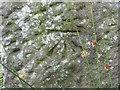 SD7248 : Ordnance Survey Cut Mark by Peter Wood