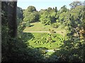 SW7727 : The maze at Glendurgan garden from the east by David Smith