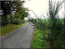 H5672 : Shinnagh Road by Kenneth  Allen