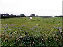 H5572 : Bull in a field, Bracky by Kenneth  Allen