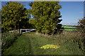 TA2825 : Footpath near Ottringham by Paul Harrop